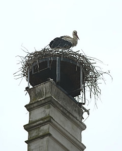 Storchennest am Dach des Schlosses Marchegg